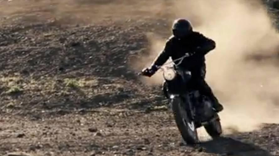 Video: Hammarhead Jack Pine