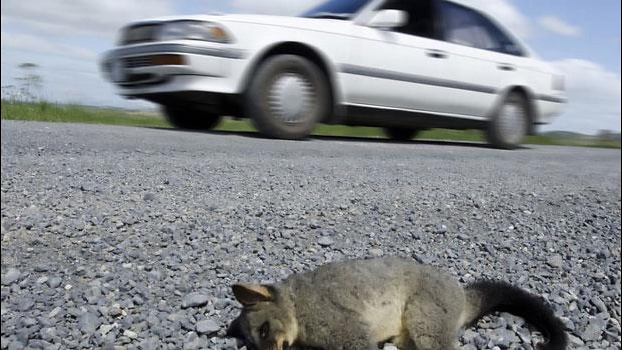 [Copertina] - Incidente con un animale: ora è d'obbligo fermarsi e chiamare i soccorsi
