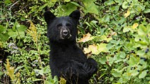 rider survives encounter with a bear