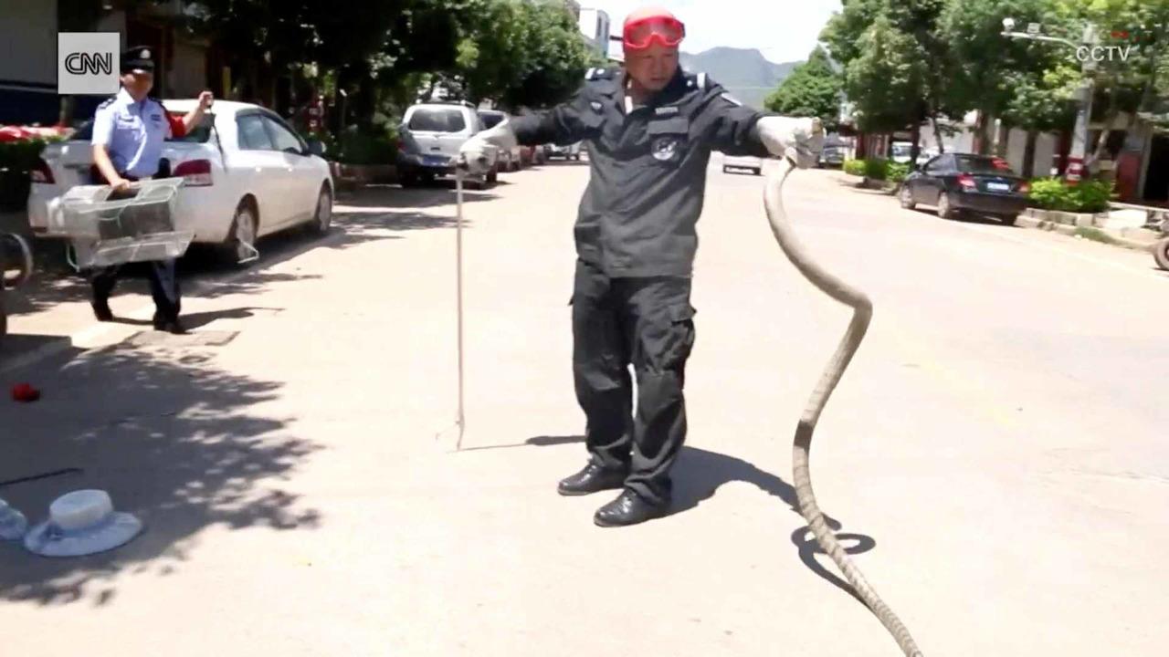 Snake In Car China