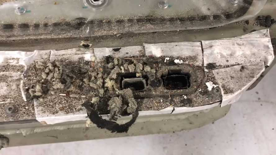 Harness-Eating Rats Make Tesla Model S Stop On The Road