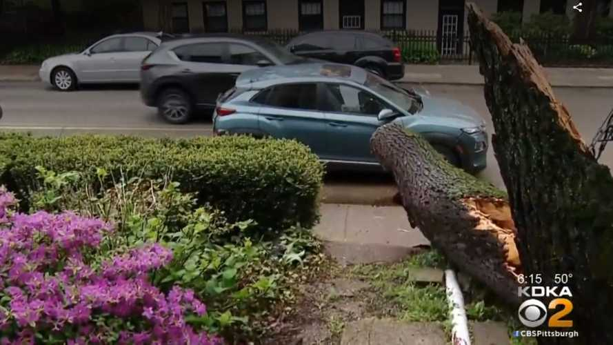 Massive Tree Crushes Hyundai Kona Electric, Occupants Not Hurt: Video
