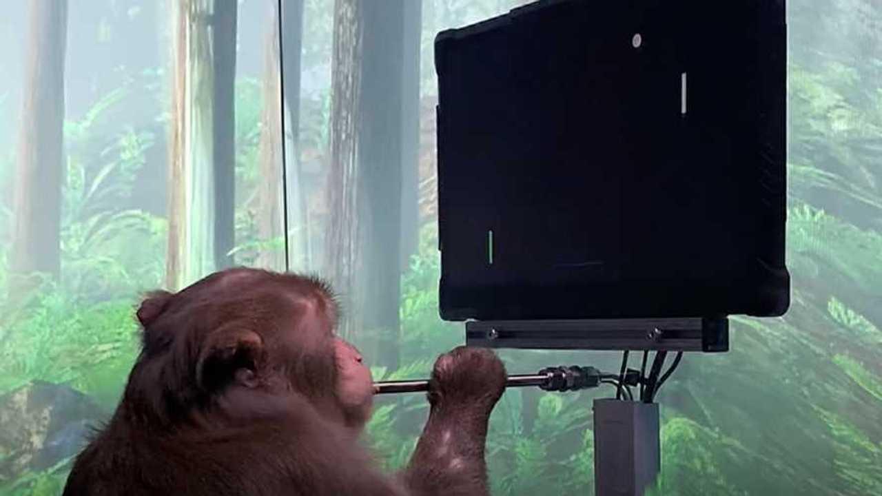 Macaco Neuralink