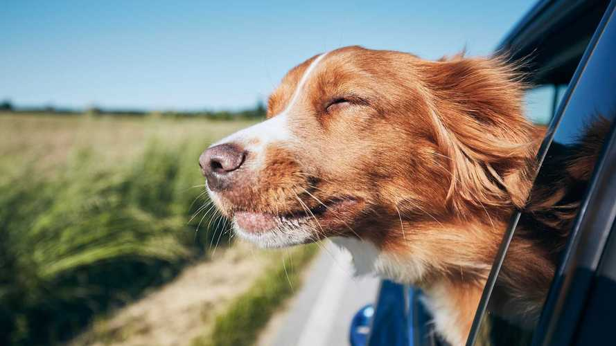 Les chiens inciteraient à conduire plus prudemment