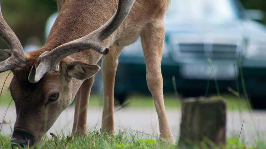 Drivers urged to look out for deer as animal collisions spike