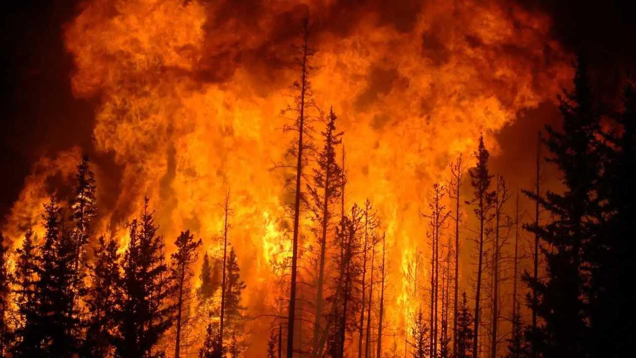 Incendio in una foresta