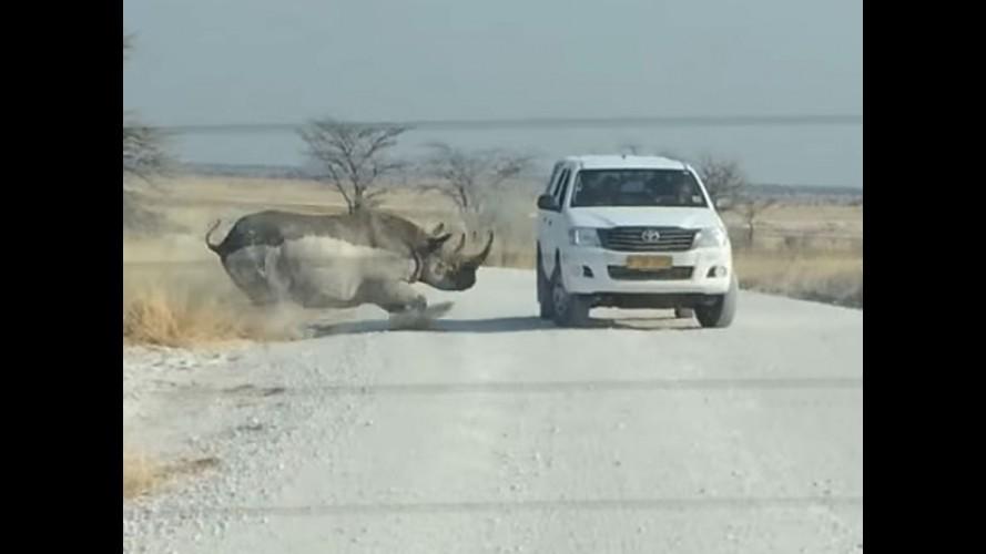 Invencível: vídeo mostra Hilux sendo atacada por rinoceronte