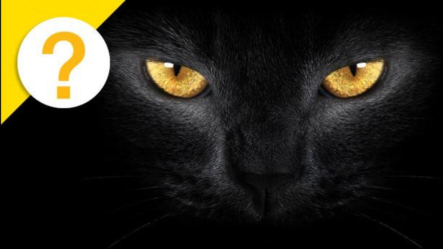 [Copertina] - Il catarifrangente è nato grazie agli occhi di un gatto