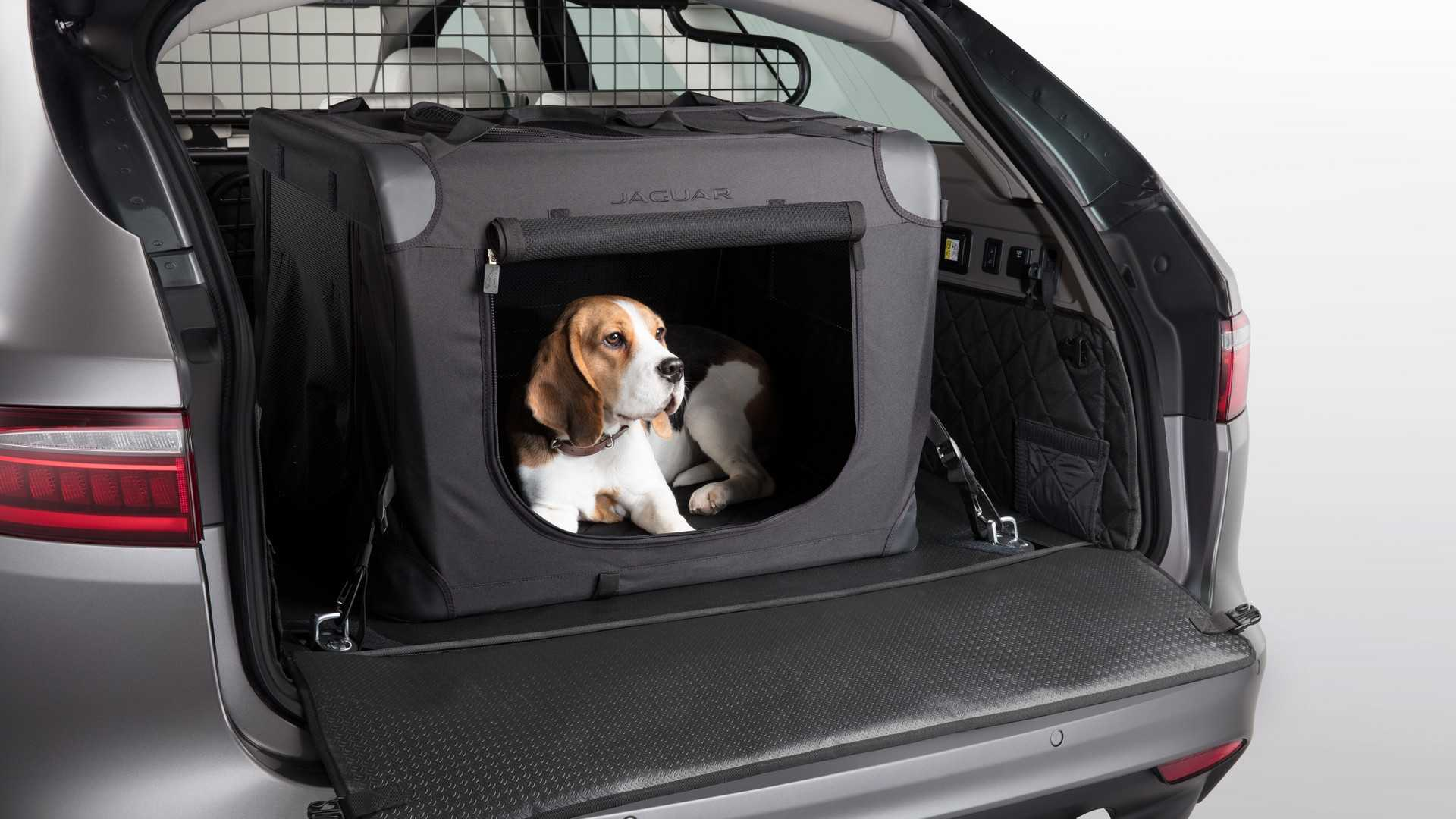 Jaguar Offers Pet-Friendly Accessories In Time For Christmas