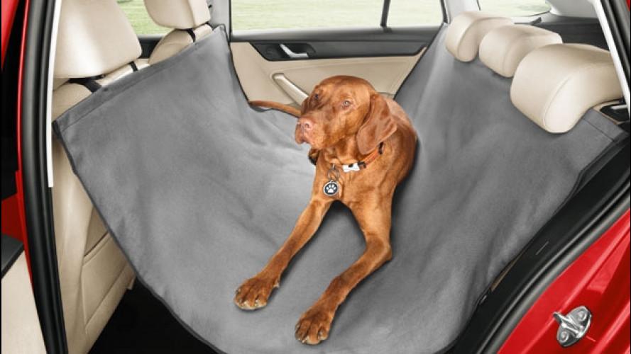 Trasporto animali in auto, le soluzioni (anche) dalle Case