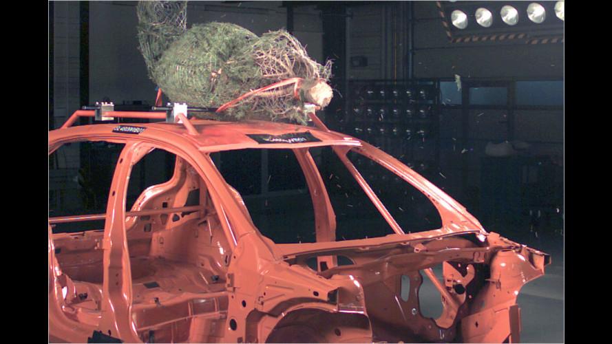 Wie transportiere ich meinen Weihnachtsbaum richtig?