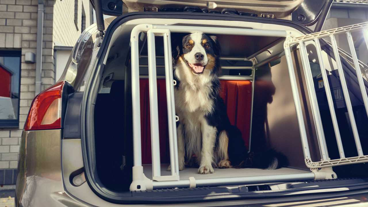 A third of dog owning drivers don't safely secure their pets