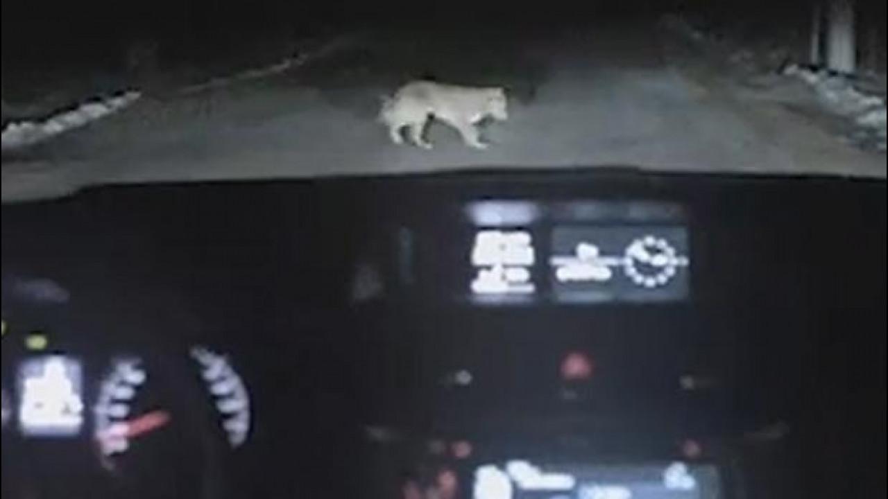 [Copertina] - Spot Subaru in Russia: la rivincita del cane fa impazzire la rete