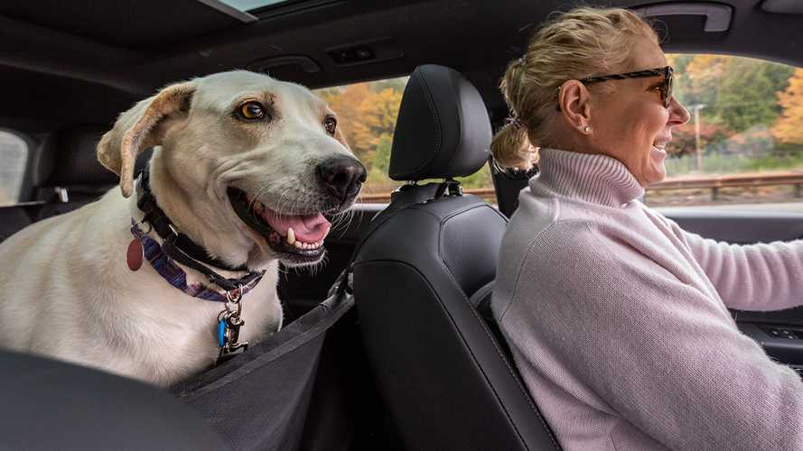 5 Best Pet Seat Covers (2021 Review)
