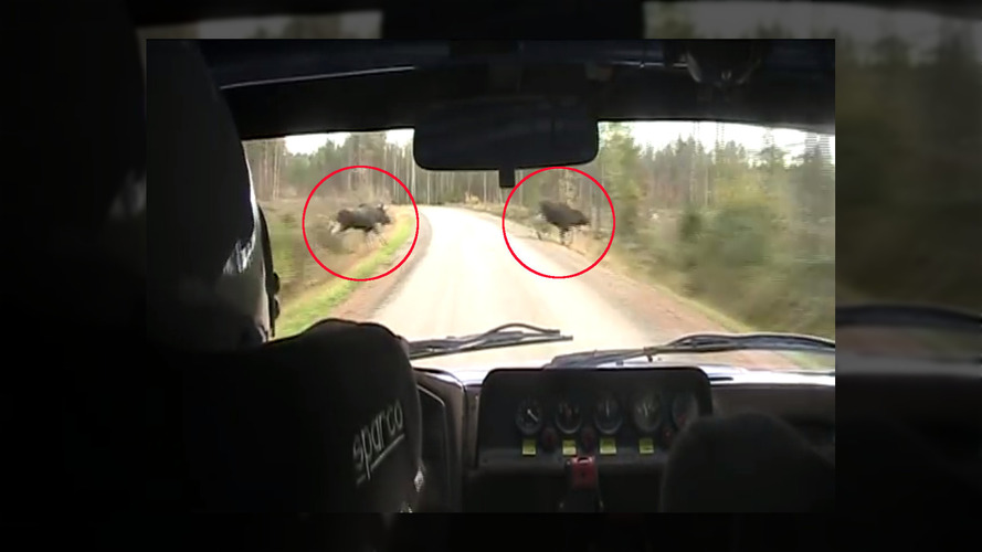 Finnish rally car blasts between two moose at high speed