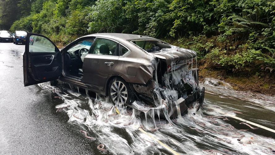 Slime Eels Spilled All Over Oregon Highway After Truck Crashes
