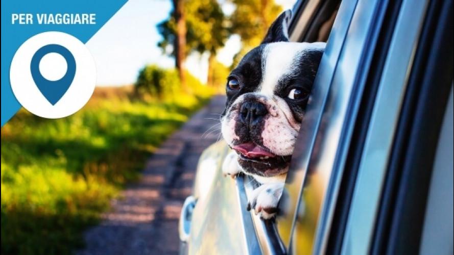 In auto con il cane, come non prendere multe