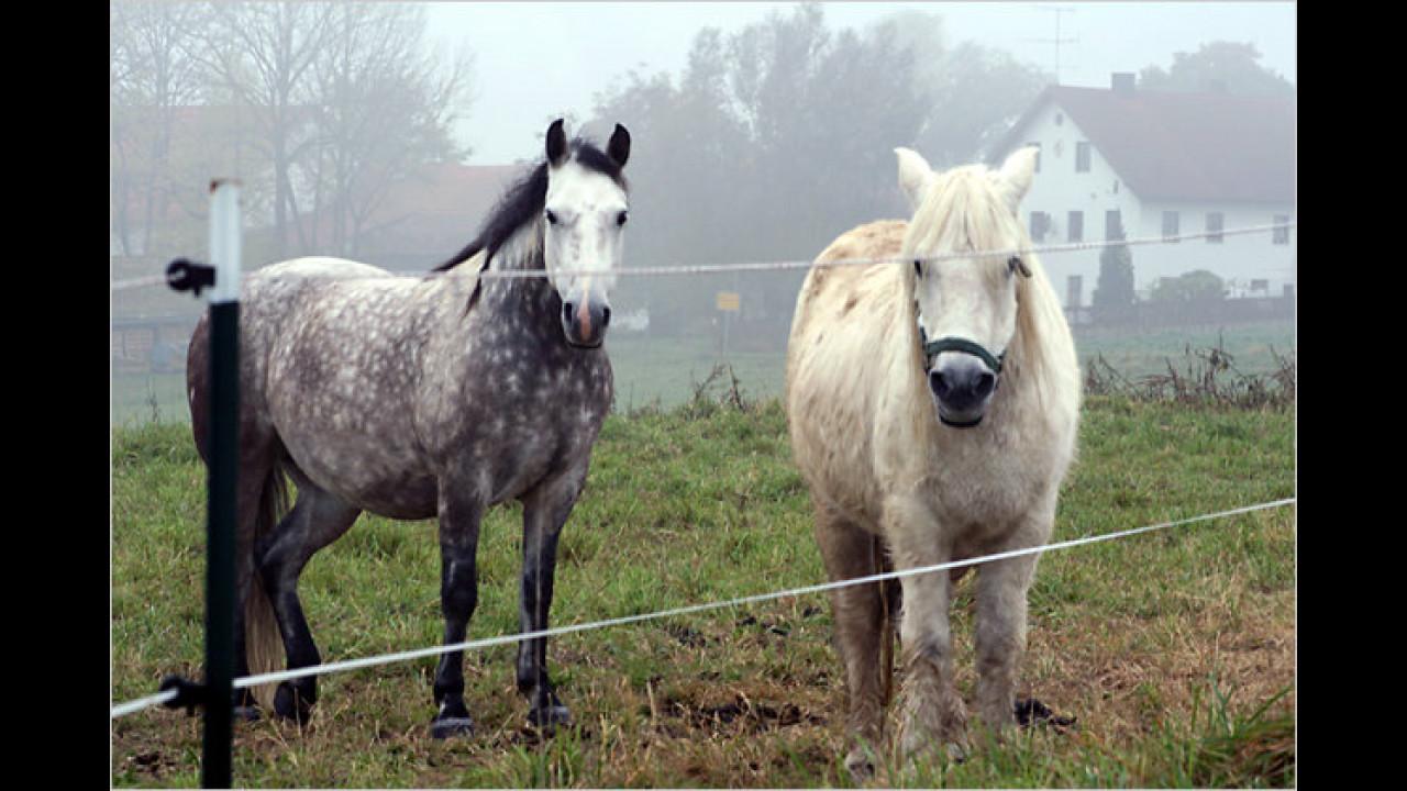 Vorsicht bei Pferden