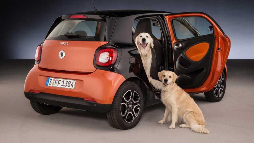 Hunde optimal im Auto transportieren: Tipps vom TÜV