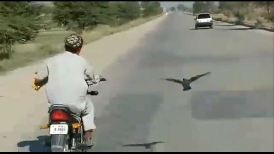 Pigeon Vs Motorcycle: The Most Unlikely Race