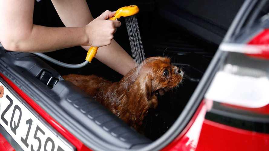 So badet man einen Hund im Ford Puma (2020)