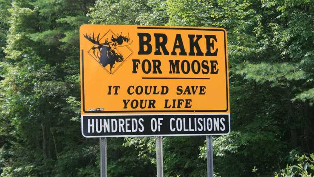 Brake For Moose Sign