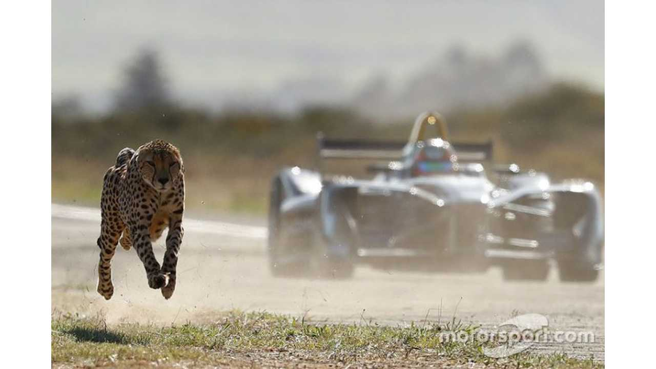 Cheetah Versus Formula E - Race Video
