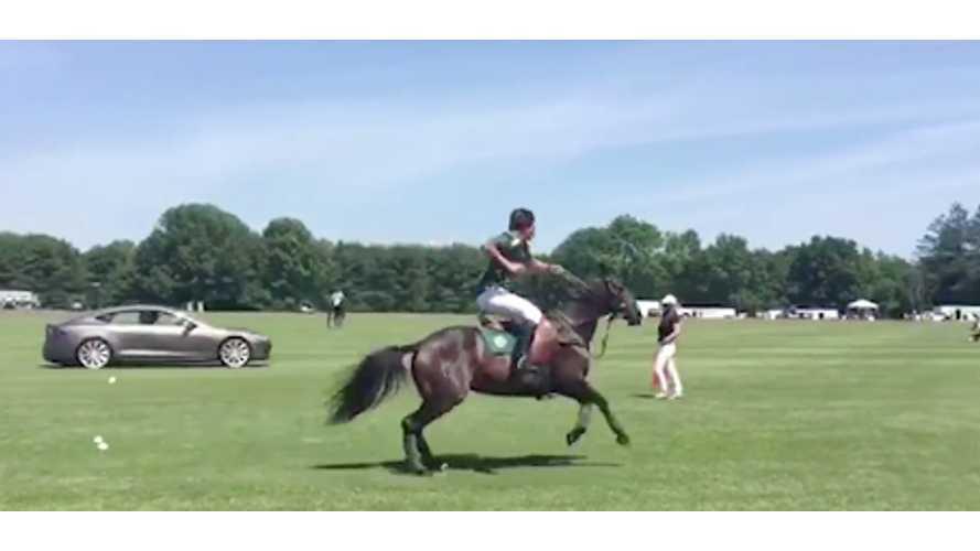 Tesla Model S P85D Races A Greenwich Polo Club Horse - Video
