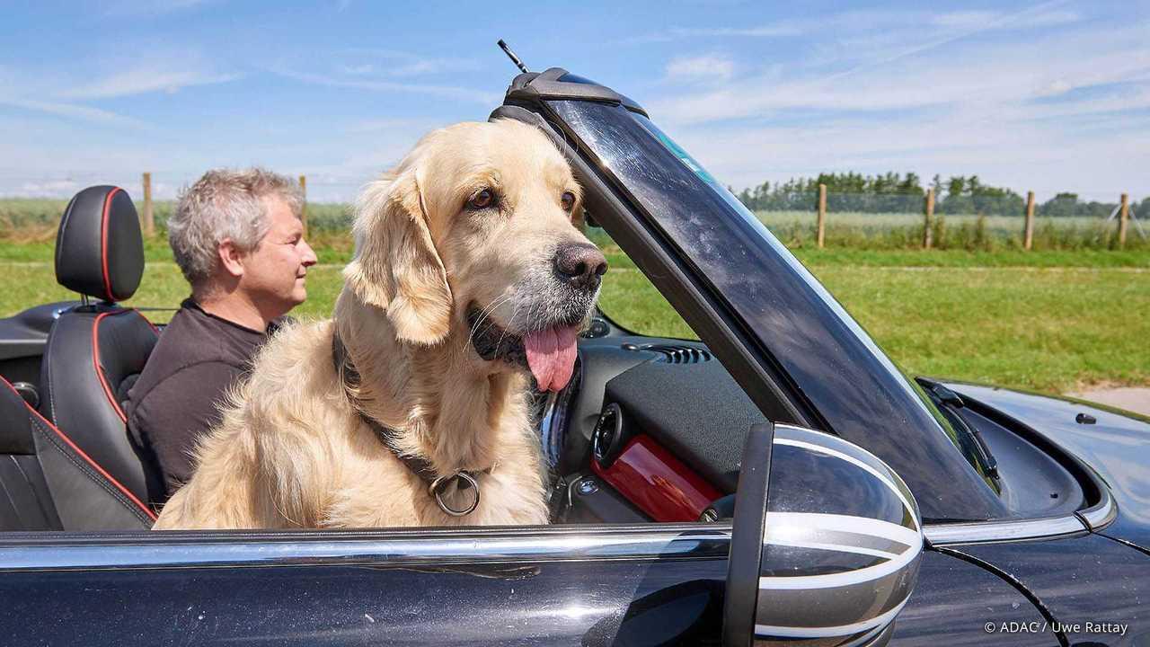 Hund im Auto: Ein Vierbeiner mit flatternden Ohren auf dem Beifahrersitz ist keine gute Lösung