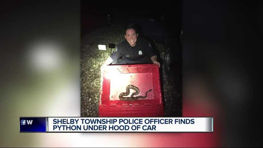 Michigan Police Find Python Hiding Under Hood Of Corvette