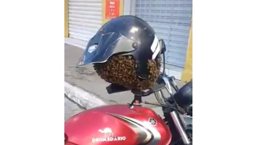 Swarm of Angry Bees Takes Up Residence in Biker's Helmet