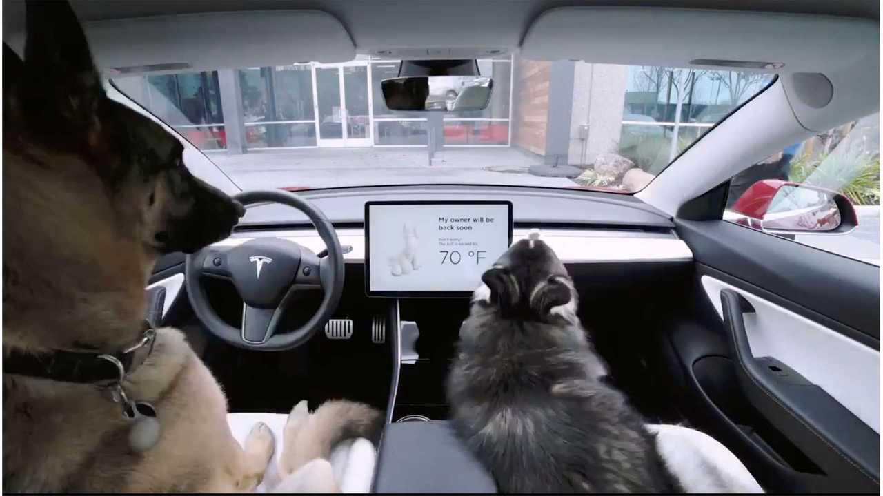 Tesla Dog Mode Keeps Pups Safe In Car & Apprises Onlookers: Video