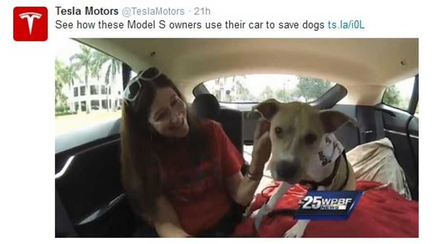 Dog Rescue Team Relies On Tesla Model S To Save Hard-To-Place & Ill Dogs