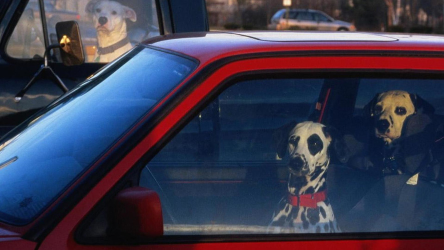 Tennessee law allows strangers to break into hot cars to save pets