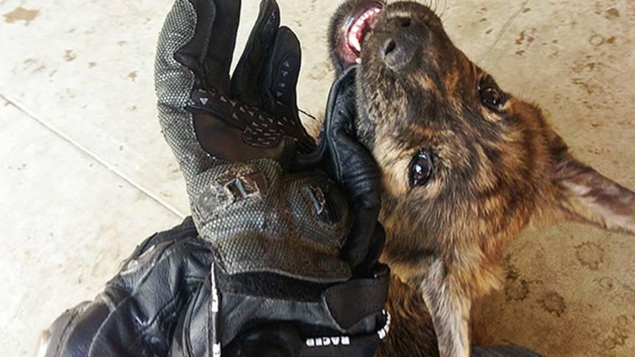 Gear: Racer Sicuro Gloves