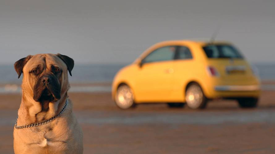 Drivers risk fines by failing to restrain their pets in the car