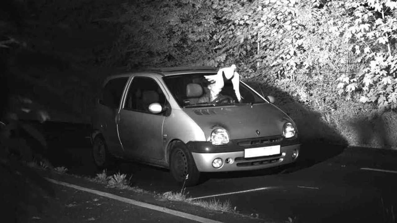 Renault twingo et la colombe
