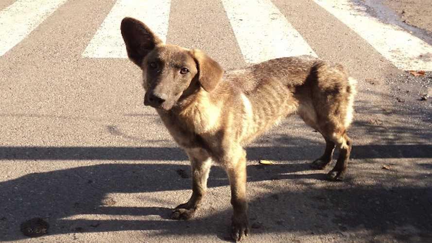 Incidente in moto col cane randagio, il Comune non paga i danni