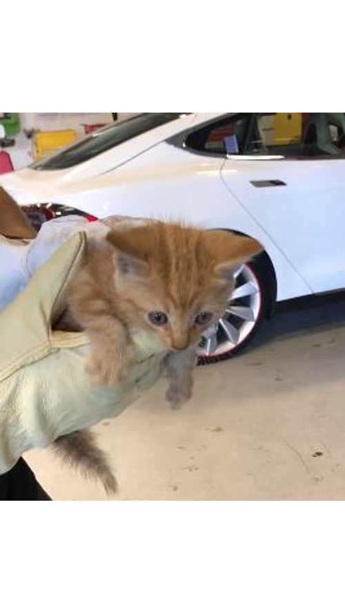 Kitten Rescued From Model X Bumper By Tesla Service Tech