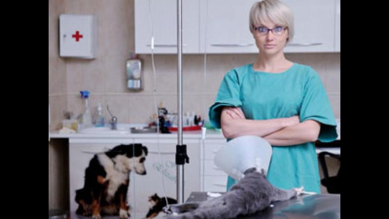 [Copertina] - Anche cani e gatti viaggeranno in ambulanza