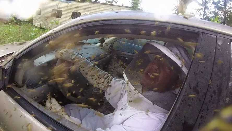 Giant Yellowjacket Nest Takes Over Chevy Malibu, These Guys Go Inside