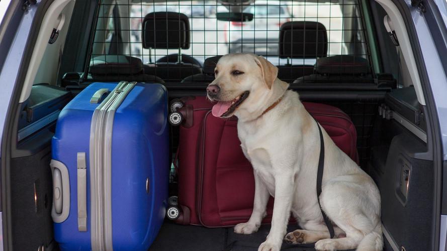 Muchos conductores no transportan correctamente a su perro en el coche