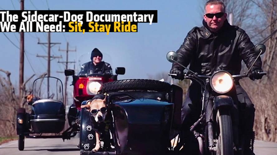 The Sidecar-Dog Documentary We All Need: Sit Stay Ride