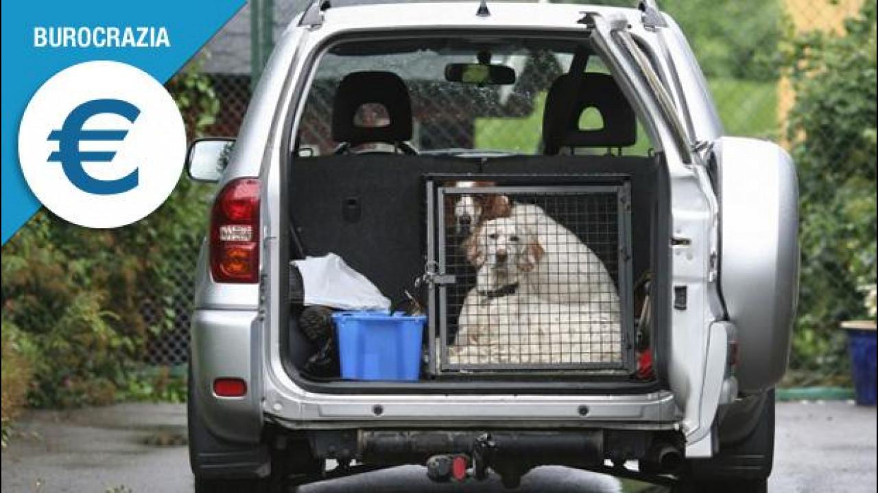 [Copertina] - Incidente, danni del vostro cane o gatto a bordo: chi paga?
