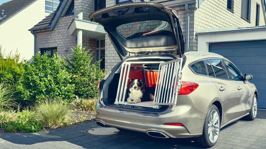This Cute Dog Helped Ford Design The New Focus Wagon