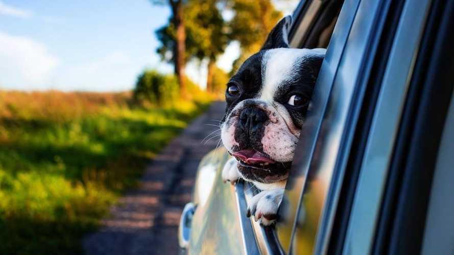 Noleggio auto, Locauto lancia un servizio per chi viaggia con i cani