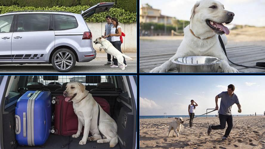 Vacances avec un chien en voiture - Les meilleurs conseils pour voyager