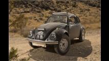 Wilde Wüsten-Käfer