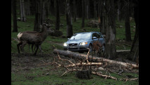 Volvo, test per evitare incidenti con animali