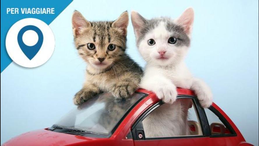 In auto col gatto, come trasportarlo in modo pratico e sicuro